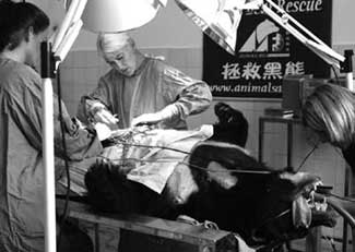 Bear Surgery