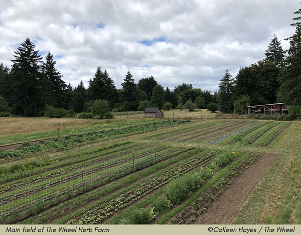 Main field, The Wheel Herb Farm ©Colleen Hayes / The Wheel