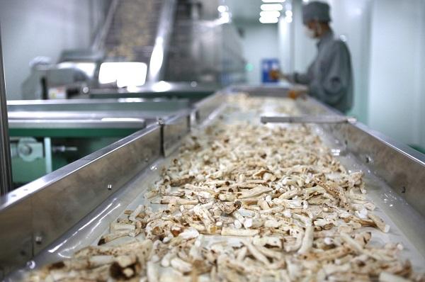 Raw herb processing at Lanzhou Foci