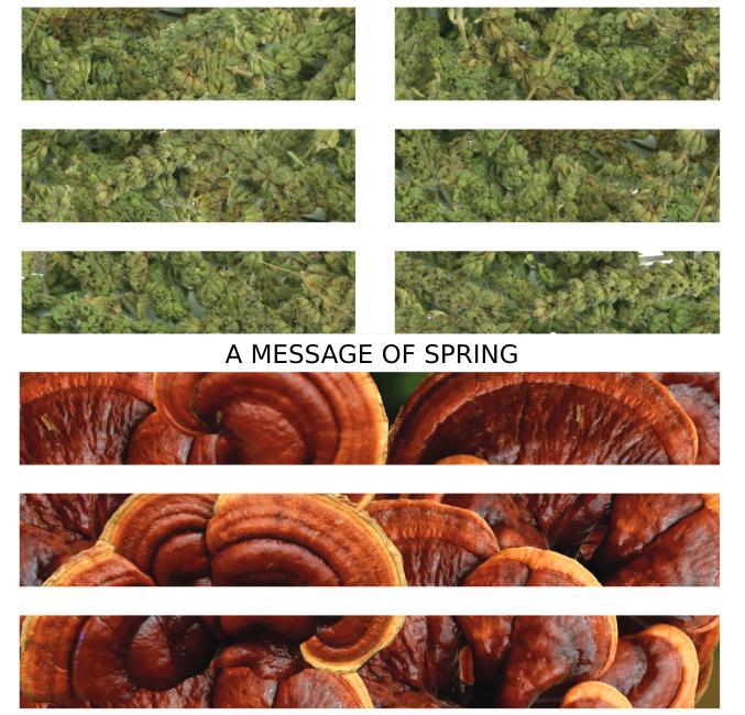 Spring I Ching