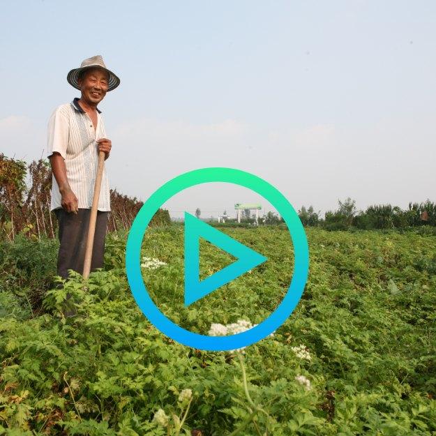 Mayway Farm to Market Video