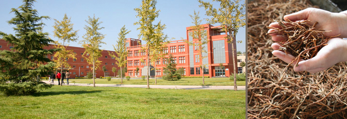 Mayway Hebei Processing Facility and Yuan Zhi