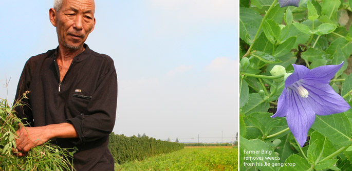 Farmer removes weeds from Jie Geng field