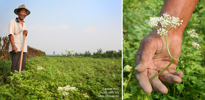 Farmer poses in his Huai Mi field